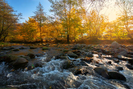 mountain river among the forest in autumn. sunny morning landscape. rocks in the water stream. cloudless blue sky