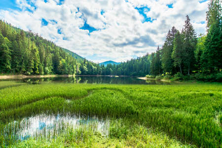 scenery around the lake in mountains. spruce forest on the shore. reflection in the water. sunny weather with clouds on the blue sky Stock Photo
