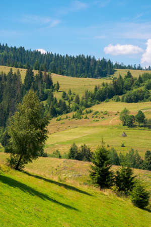 rural fields on a sunny summer day. trees on the grassy hills. beautiful countryside scenery of carpathian mountains. fluffy clouds on the blue sky