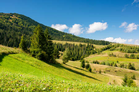 rural fields on a sunny autumn day. trees on the grassy hills. beautiful countryside scenery of carpathian mountains. fluffy clouds on the blue sky Stock Photo