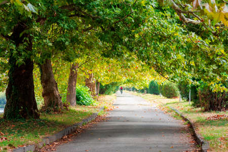 park alley in early autumn. trees in green foliage. sunny weather Banque d'images
