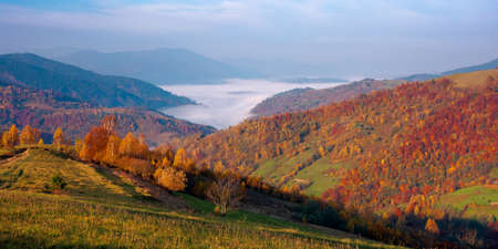 autumn sunrise in mountains. countryside landscape in fall season. fog in the distant valley. sunny morning Stock Photo
