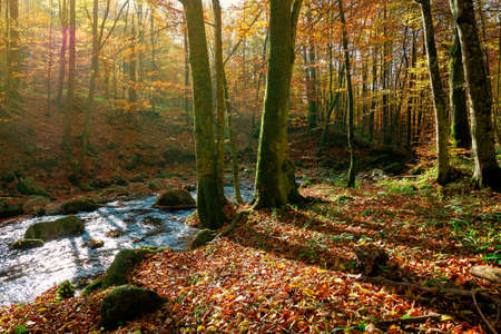 trees on the bank on the mountain river. forest stream among the forest in colorful foliage. sunny autumn weather
