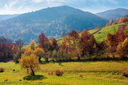 countryside autumn scene in mountains. trees in fall foliage. beautiful sunny weather with clouds on the sky Stock Photo