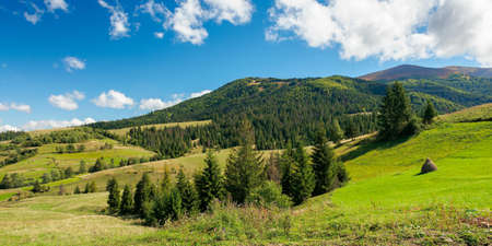 rural fields on rolling hills in green grass. trees on the meadows. mountainous countryside landscape on a sunny day