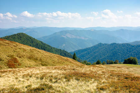 mountain meadow on a sunny autumn day. dry grass on the hills. mountain range rolling in to the horizon. fluffy clouds on the blue sky at high noon Stock Photo