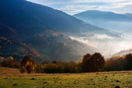 misty autumn morning in carpathian mountains. valley full of fog. sunny and hazy weather with clouds on the sky. beauty of rural area in highlands