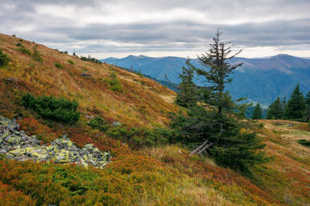 spruce forest on the hillside meadow. beautiful mountain landscape in autumn season. high ridge in the distance. rainy weather with cloudy sky Stock Photo - 155612157