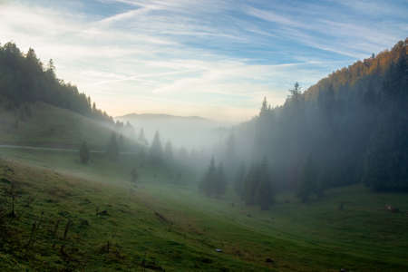 morning mist in apuseni natural park. valley full of fog at dawn. beautiful landscape of romania mountains in autumn. spruce trees on the hills. glowing clouds on the sky