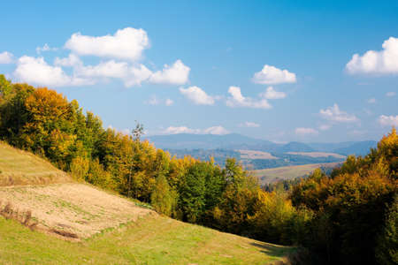 rural landscape of carpathian mountains in autumn. trees in yellow foliage. beautiful sunny weather Stock Photo