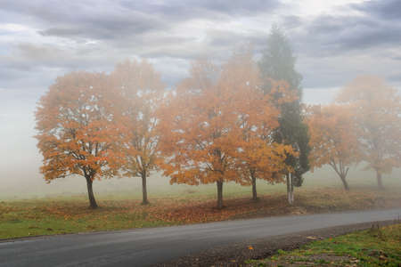 trees in the fog on the road side. misty autumnal weather. overcast sky. fall season Stock Photo
