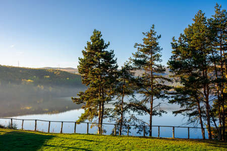 pine trees on the Gilau lake of cluj country. sunny morning autumn scenery on the shore. reflection on the calm water surface. beauty of romanian landscape