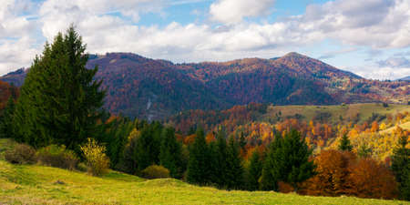 mountainous countryside landscape in autumn. beautiful scenery with forested rolling hills in fall colours. carpathian rural landscape. sunny day with clouds on the sky Stock Photo