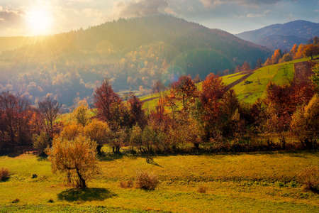 countryside autumn scene in mountains at sunset. trees in fall foliage. beautiful sunny weather with clouds on the sky in evening light Stock Photo