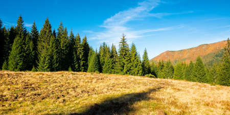 apuseni natural park in fall season. mountainous landscape of Romania. spruce trees on grassy hills. sunny autumn weather. blue sky with clouds Stock Photo