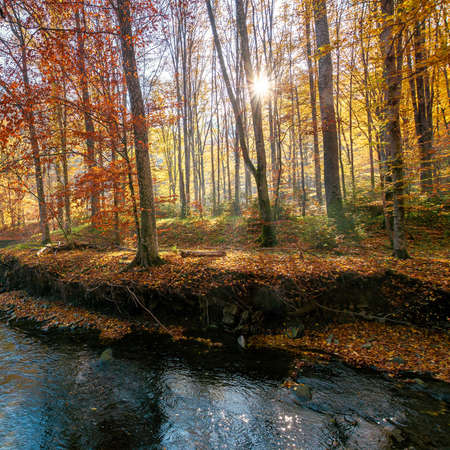 small mountain river among the forest. beautiful nature scenery at sunrise. beech trees in colorful foliage. sunny weather Stock Photo