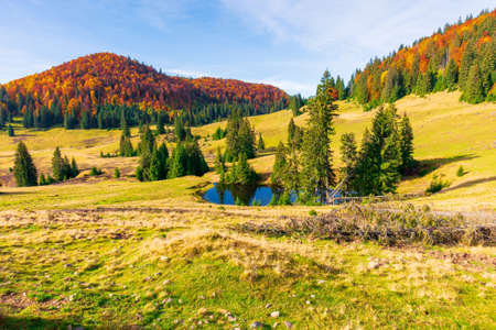 autumn landscape in mountains. fir trees around the pond on the meadow in yellowish weathered grass. distant hill in the colorful red orange colors of beech forest