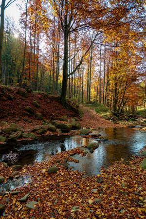 mountain river in autumn forest. rocks and fallen foliage on the shore. trees in yellow and red foliage. gorgeous nature autumnal scenery