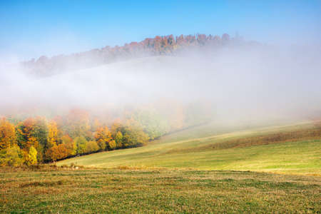 autumn landscape in morning mist. beautiful scenery with colorful forest on the grassy hills. sunny weather Stock Photo