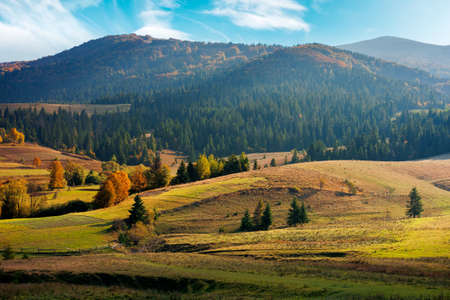 mountainous rural landscape in autumn season. trees and fields on rolling hills. beautiful countryside afternoon scenery on a sunny day
