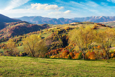 mountainous countryside scenery on a sunny day. beautiful rural landscape in autumn season. trees in fall colors. bright blue sky with fluffy clouds