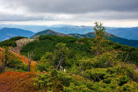 autumn scenery in high mountains. trees on the rocky slopes and hills. colorful nature scenery with cloudy sky above the distant ridge