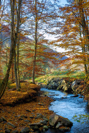 mountain water stream in the beech forest. beautiful nature scenery in autumn on a sunny day Stock Photo