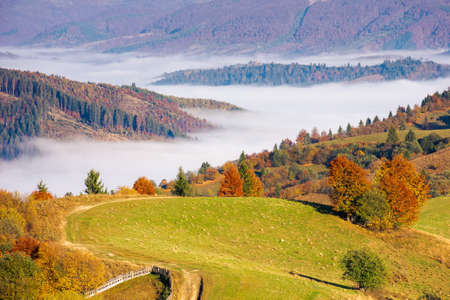 morning rural landscape in mountains. beautiful countryside scenery in autumn season. distant valley full of fog. bright sunny morning