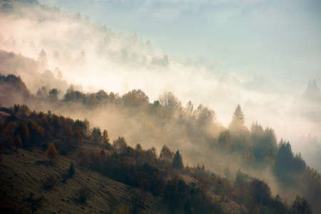 foggy mountain landscape at sunrise. beautiful autumn scenery in the valley. mist in morning light