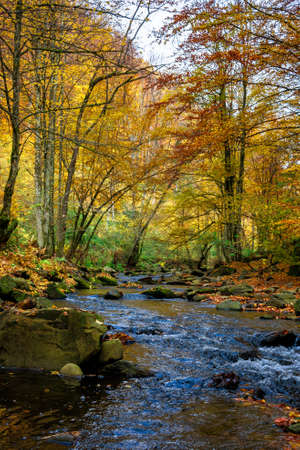 small forest stream. beautiful autumn nature scenery. trees in colorful foliage. rocks in the water