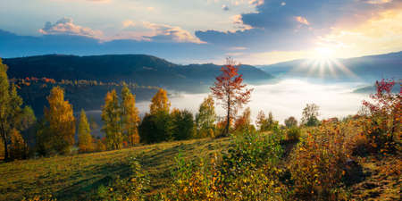 stunning rural landscape. foggy scenery at sunrise in autumn season. trees on mountain hills in colorful foliage. panoramic view