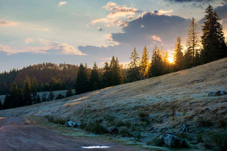 coniferous forest in autumn at sunrise. dry grass in hoarfrost on the hillside meadow. clouds on the morning sky