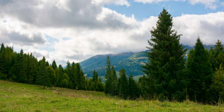 spruce forest on the meadow in mountains. autumn weather with clouds on the sky. beautiful carpathian landscape. panoraminc view Stock Photo