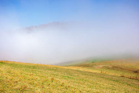 misty morning autumn scenery. mountain landscape with trees in colorful foliage on the grassy meadow