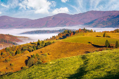 rural landscape in autumn season. foggy valley in morning light. trees in colorful foliage. sunny weather. beautiful countryside of carpathian mountains in ukraine