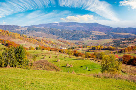 carpathian rural landscape in autumn. beautiful countryside scenery on a sunny day. haystacks on the green fields rolling through hills. trees in fall foliage. village in the valley Stock Photo