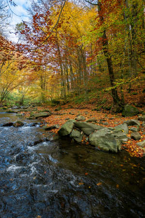 mountain river in beech forest. beautiful autumnal scenery of carpathian woodland. trees in fall colors. boulders in the stream. nature freshness concept Stock Photo