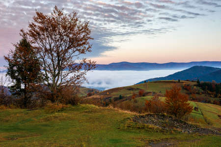 stunning rural landscape. foggy scenery at dawn in autumn season. trees on mountain hills in colorful foliage. panoramic view. fence on the hillside