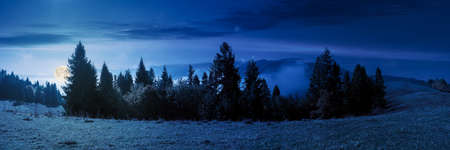 foggy autumn landscape panorama at night. spruce trees on the meadow in full moon light. mountain behind the morning mist. cloud inversion natural phenomenon observed from the side Stock Photo