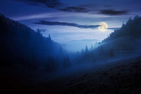 morning mist in apuseni natural park at night. valley full of fog in full moon light. beautiful landscape of romania mountains in autumn. spruce trees on the hills.