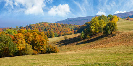 autumn landscape in mountains. beech trees on the grassy hill. wonderful sunny weather on a sunny morningautumn landscape in mountains. beech trees on the grassy hill. wonderful sunny weather on a sunny morning