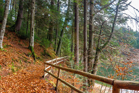 pathway through the forest. beautiful autumn scenery. wooden fence along the walkway covered in fallen foliage