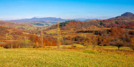 mountainous countryside on a sunny day. trees in colorful foliage on the grassy hills. ridge in the distance beneath a cloudless blue sky