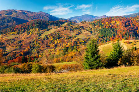 rural landscape in mountains. scenery in fall colors. beautiful sunny weather with fluffy clouds on the sky Stock Photo