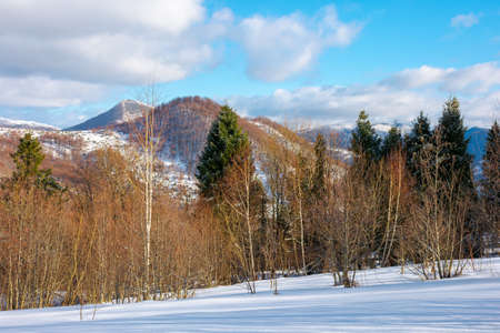 sunny winter landscape in mountains. birch forest on snow covered meadow. clouds on the vivid blue sky