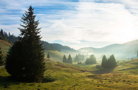 trees in the valley of mountainous natural park. foggy morning in autumn season. beautiful rolling landscape beneath a glowing sky Stock Photo