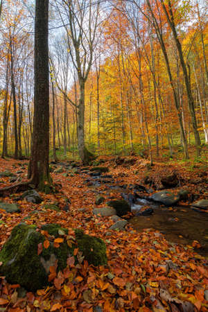 brook in the forest. wonderful nature scenery on a sunny autumnal day. trees in colorful foliage. water stream among the rocks and fallen leaves on the ground