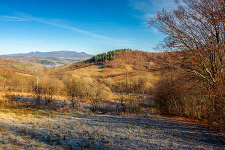 autumnal rural landscape of carpathian mountains. beautiful sunny weather on november frosty morning. trees with no foliage