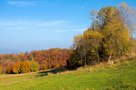 trees in colorful foliage on the hills. rolling countryside scenery in autumnal season. wonderful sunny weather on a sunny day in carpathian mountain landscape Stock Photo