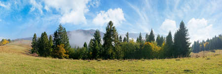 foggy autumn landscape panorama. spruce trees on the meadow. mountain behind the morning mist. cloud inversion natural phenomenon observed from the side. wonderful weather